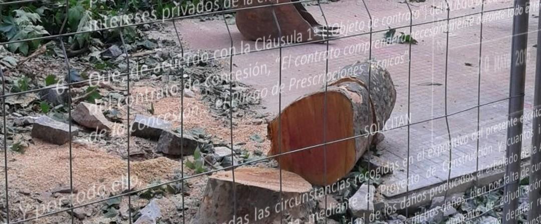 Ven a llorar por los árboles talados en Cáceres… y a evitar que caigan más