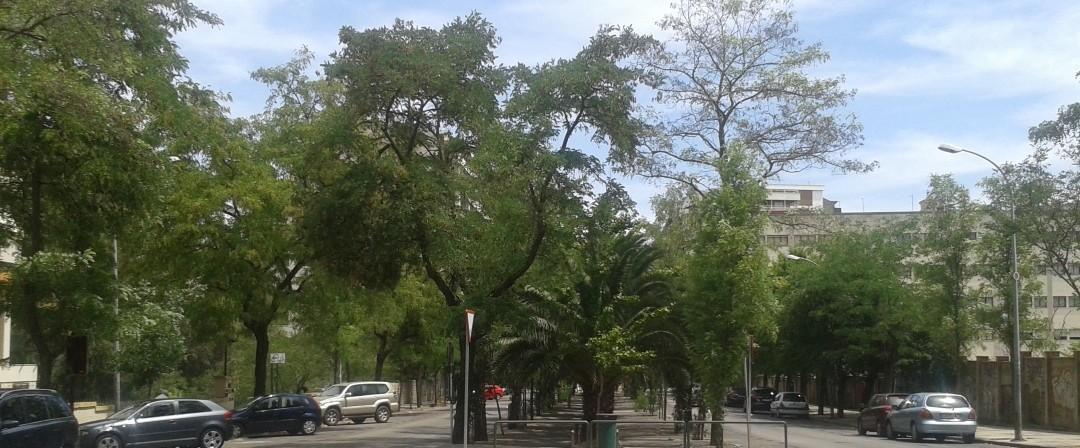 Decenas de árboles salvados en Virgen de Guadalupe