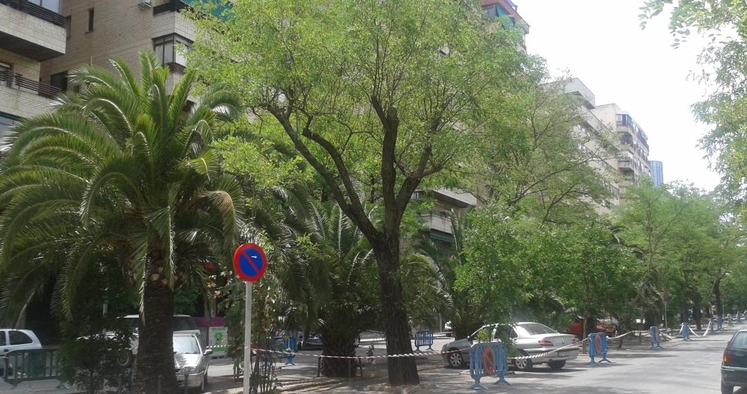 arboles-salvados-virgen-guadalupe-caceresverde-acacias