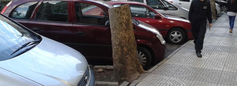 ¿Por qué nos mienten sobre la tala de árboles en Cáceres?