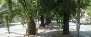 arboles-salvados-virgen-guadalupe-caceresverde-mediana
