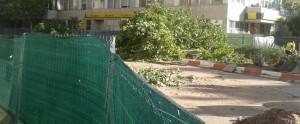 caceresverde-arboles-cojos-zozobrantes