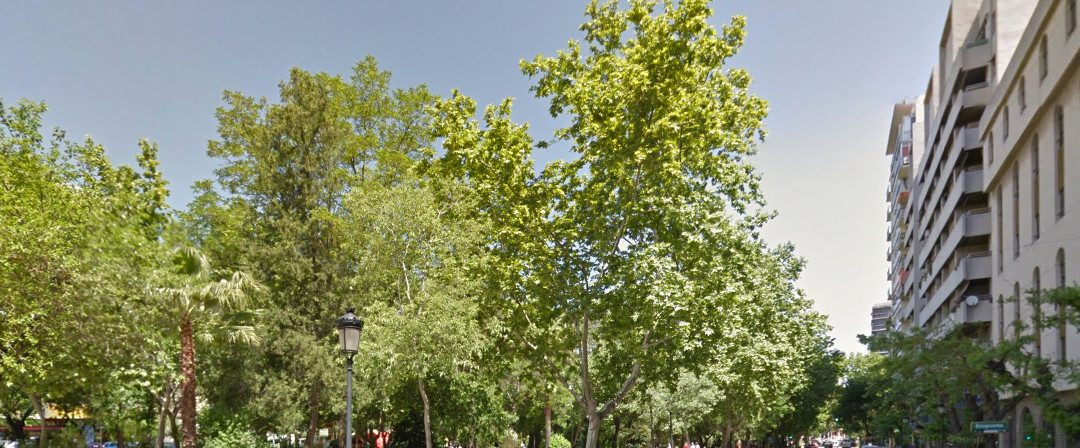 Árboles y arbustos de la ciudad de Cáceres – conferencia y paseo