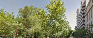 arboles-y-arbustos-caceres-mayo-2016