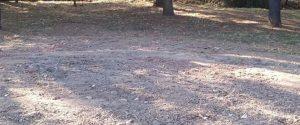 caceresverde-cedro-eliminado