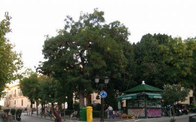 Carta Abierta a la Alcaldesa de Cáceres