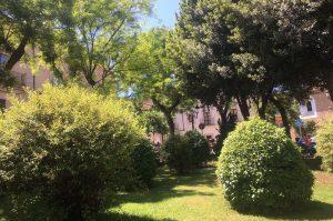 caceresverde-salvar-plaza-san-juan-arbustos
