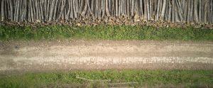 caceresverde-medio-ambiente-talas