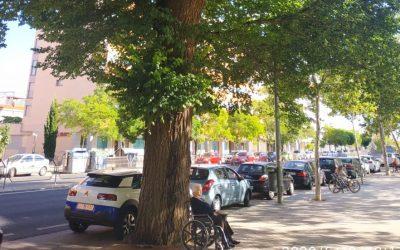 Reunión Virtual mantenida a propuesta de CaceresVerde con el Ayuntamiento de Cáceres